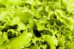 Salad leaves background Royalty Free Stock Photos