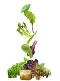Salad Leaves Collection Royalty Free Stock Photo