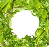 Salad Leaves frame on white background Royalty Free Stock Photography