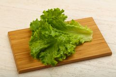 Salad leaves. Fresh bright green Salad leaves over wood background royalty free stock photos