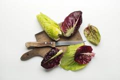 Salad leaves Stock Image