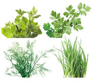 Salad leaves and herbs Stock Photography