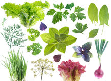 Salad leaves and herbs Royalty Free Stock Images