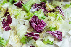Salad leaves with iceberg, romaine lettuce and radicchio as a ba Royalty Free Stock Image