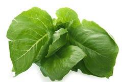 Salad leaves Romul. On white background Stock Photos