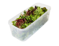 Salad Leaves in Storage Container Stock Photography