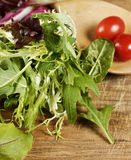 Salad Leaves And Tomatoes Stock Images