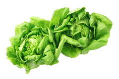 Salad Lettuce Royalty Free Stock Image