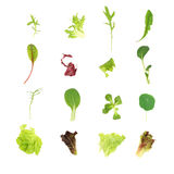 Salad Lettuce Leaf Selection Royalty Free Stock Photos