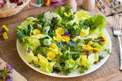Salad with lettuce and wild edible plants. Coltsfoot, chickweed, lungwort, ground elder leaves stock photo