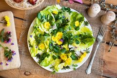 Salad with lettuce and wild edible plants, top view. Salad with lettuce and wild edible plants coltsfoot, chickweed, lungwort, ground elder leaves, top view royalty free stock photography