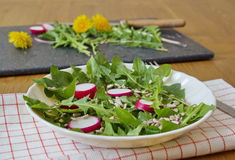 Salad made by leaves of dandelion, sunflower seeds and radish Royalty Free Stock Photography
