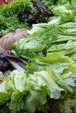 Salad at the market Royalty Free Stock Photography