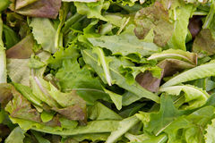 Salad mix Royalty Free Stock Photo