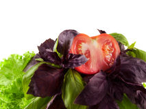 Salad mix with basil, lettuce, tomato. Isolated. Royalty Free Stock Photos