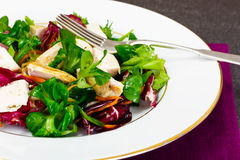 Salad Mix Batavian, Frise, Radicchio, Chicory  Chicken Royalty Free Stock Photo