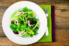 Salad Mix Batavian, Frise, Radicchio, Chicory, Squid Royalty Free Stock Image