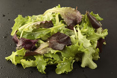 Salad mix on black background Royalty Free Stock Images