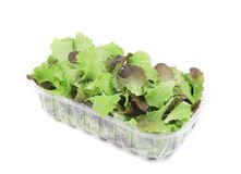 Salad mix in plastic box. Stock Photography