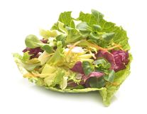 Salad mix with rucola, frisee, radicchio and lamb`s lettuce. Isolated on white background Stock Images