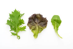 Salad mix with rucola, frisee, radicchio and lamb's lettuce. On white background Stock Images
