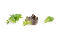 Salad mix with rucola, frisee, radicchio and lamb's lettuce. On white background Stock Photos