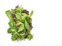 Salad mix with rucola, frisee, radicchio and lamb's lettuce Royalty Free Stock Image
