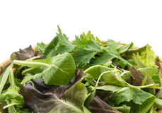 Salad mix with rucola, frisee, radicchio and lamb's lettuce Stock Photo