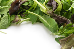 Salad mix with rucola, frisee, radicchio and lamb's lettuce Stock Image