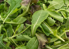Salad mix with rucola, frisee, radicchio and lamb's lettuce Stock Photos