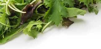 Salad mix with rucola, frisee, radicchio and lamb's lettuce Royalty Free Stock Images
