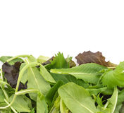 Salad mix with rucola, frisee, radicchio and lamb's lettuce Royalty Free Stock Photos