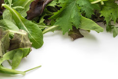 Salad mix with rucola, frisee, radicchio and lamb's lettuce Royalty Free Stock Photography