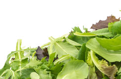 Salad mix with rucola, frisee, radicchio and lamb's lettuce Stock Photography