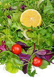 Salad mix with rucola, frisee, radicchio and lemon Stock Photos