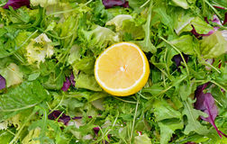 Salad mix with rucola, frisee, radicchio and lemon Royalty Free Stock Images