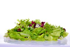 Salad mix with rucola, frisee, radicchio Stock Image