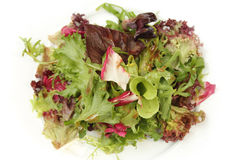 Salad mix with rucola Stock Image