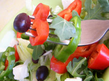 Salad mixed. On a forg Royalty Free Stock Image