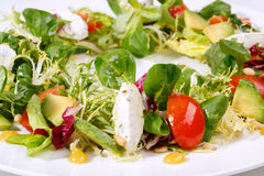 Salad with mozzarella and tomatoes Royalty Free Stock Images