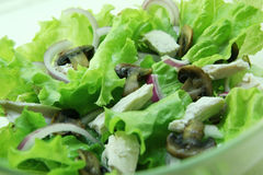 Salad with mushrooms and chicken. Stock Images