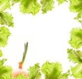 Salad and onion border Stock Photography