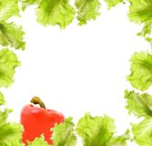 Salad and paprika border Royalty Free Stock Images