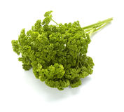 Salad parsley food vegetable vegetarian cooking Royalty Free Stock Photos