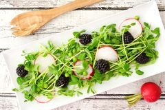Salad with pea shoots, radishes, blackberries on a rectangular plate Royalty Free Stock Images