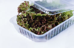 Salad in a plastic container Royalty Free Stock Image