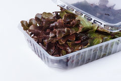 Salad in a plastic container Stock Photography