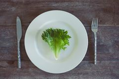 Salad On A Plate Royalty Free Stock Image