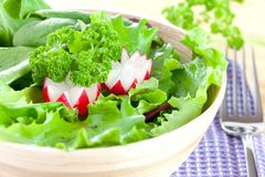 Salad with radish Royalty Free Stock Image