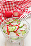 Salad with radish and cucumber Royalty Free Stock Images